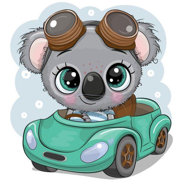 Koala fiú 1 minta